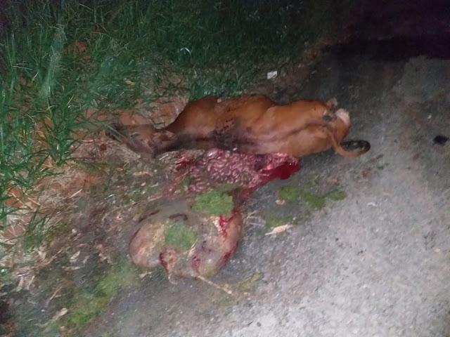 Duas pessoas morreram em acidente na BR-460 provocada por bovino em Lambari, MG 3